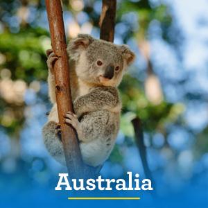 Australian Cruise