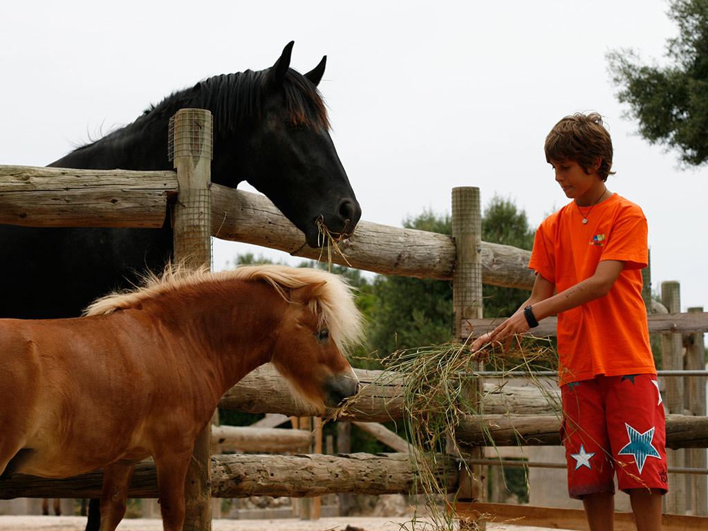 Lloc de Menorca Animal Park