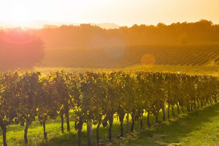 Bordeaux Sunrise