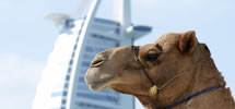 Middle East & Dubai Cruises