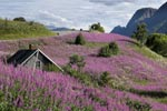 Heathland Norway