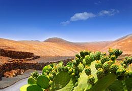 Discount Playa Blanca,Lanzarote Holidays